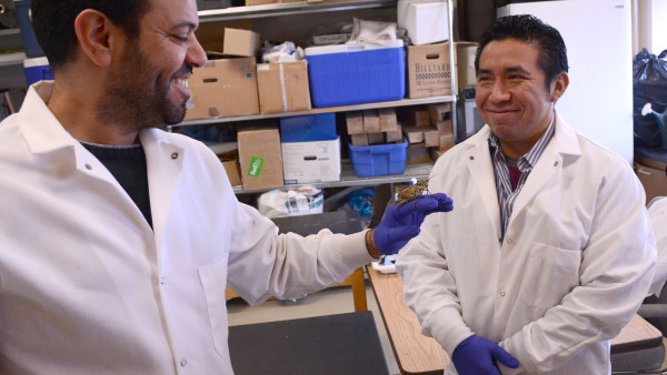 Double duty: Locust control coordinator from Yucatan continues Ph.D. studies and learning new treatment tactics for 'perfect pest'