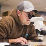 Matt Jolivet examines a specimen under the microscope