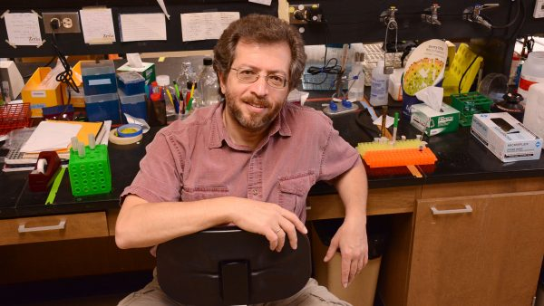 Gomelsky named American Association for the Advancement of Science Fellow