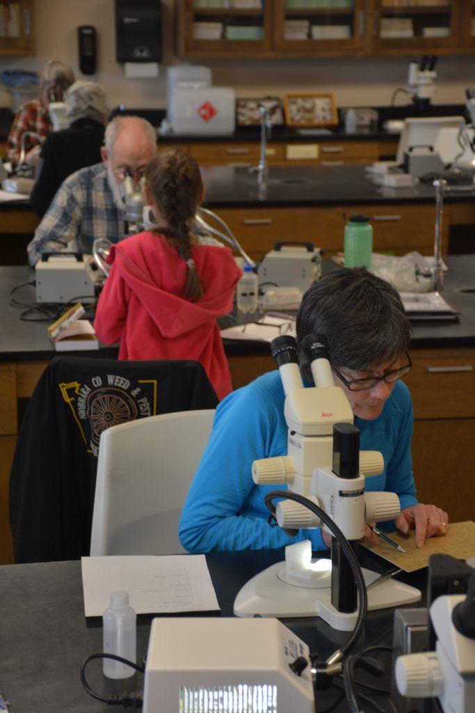 Five entomology students at microscopes.