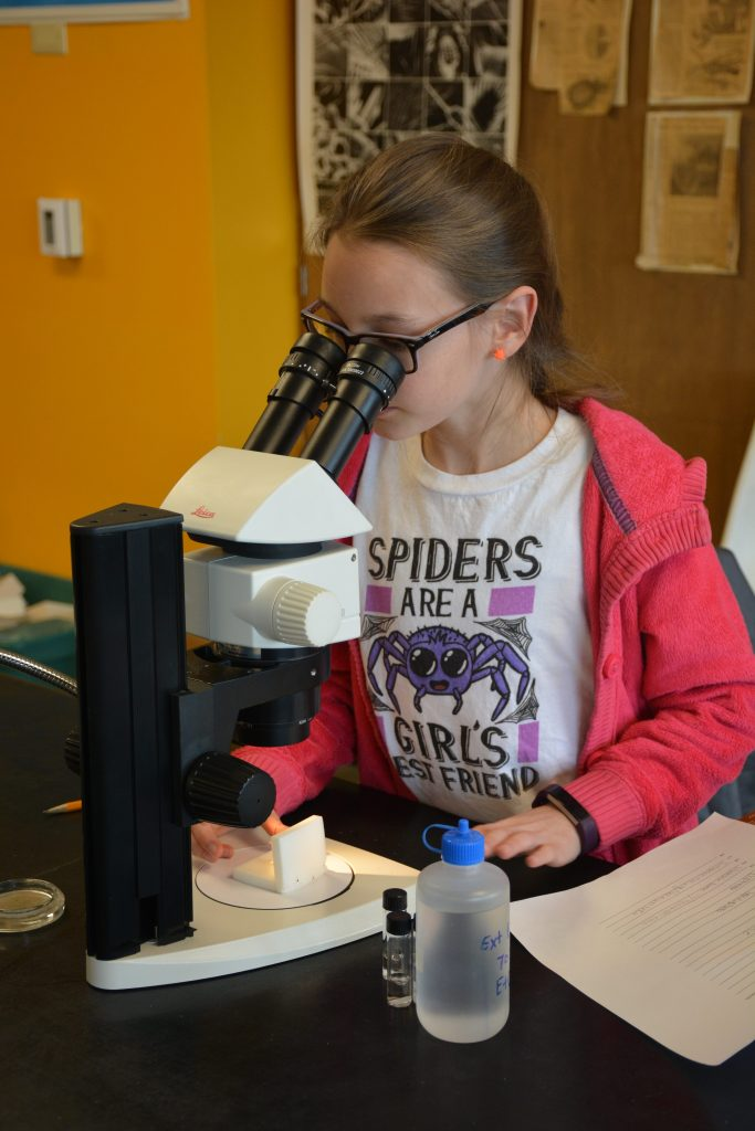 Girl with spider t-shirt looking at insect through microscope.