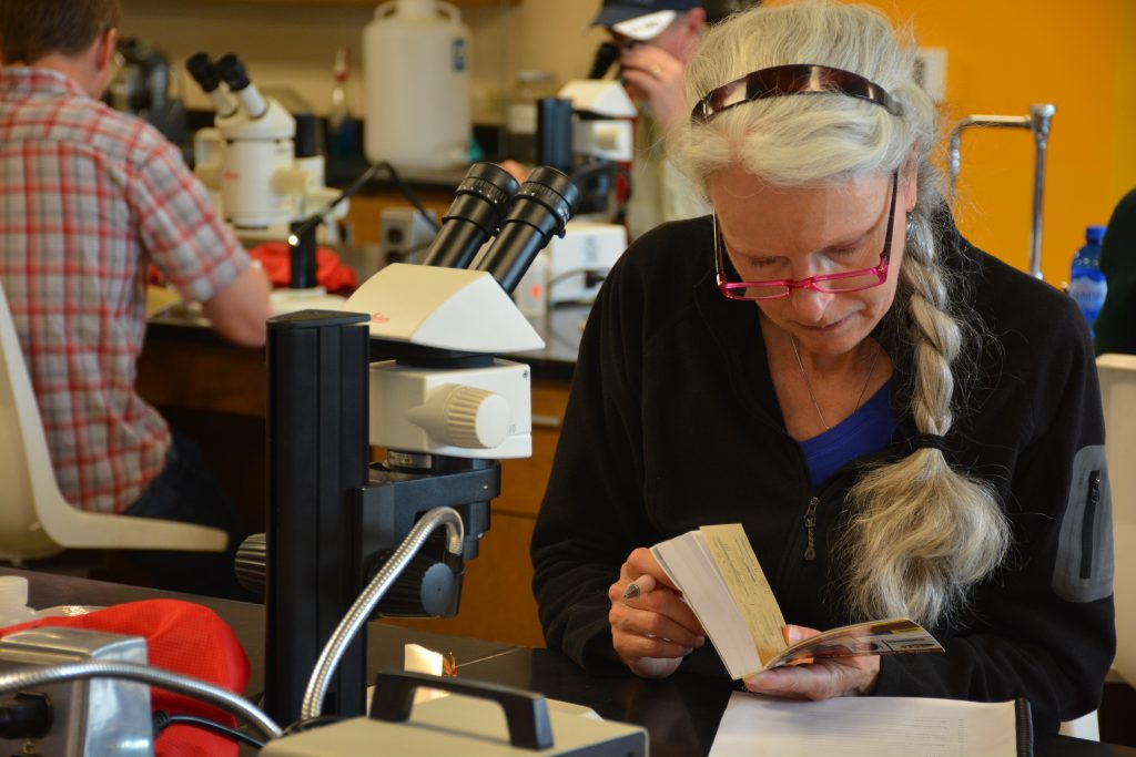 Woman with glasses, long gray braid, studies book, microscope with specimen in background.